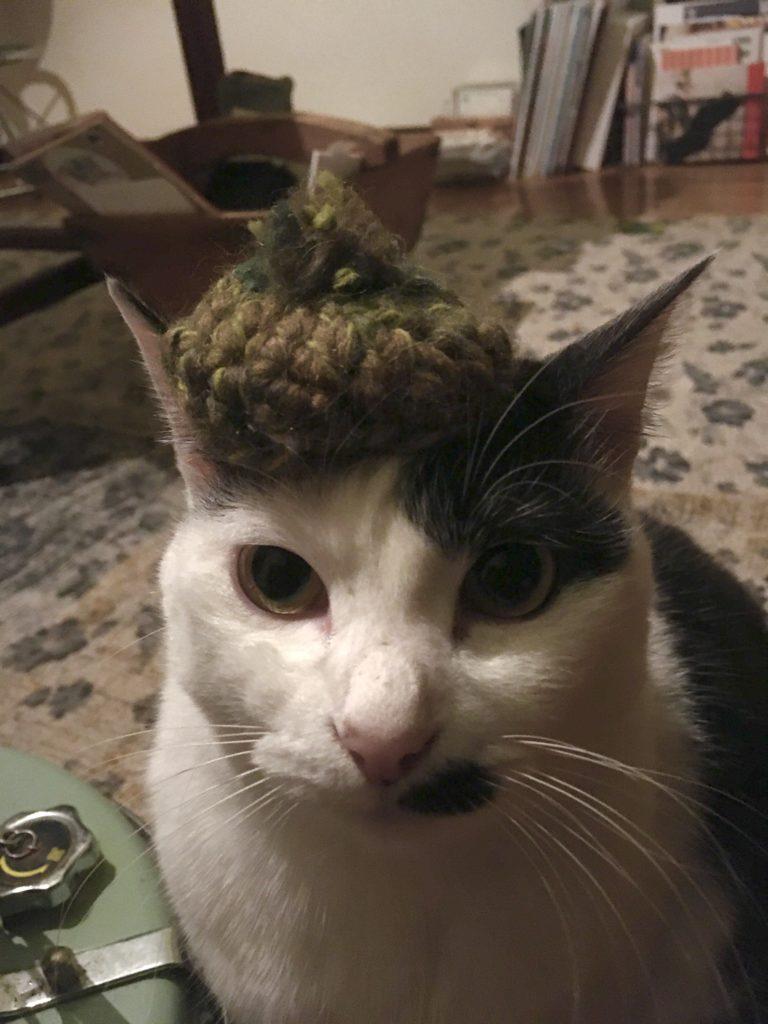 猫に、ベレー帽を被せてみた