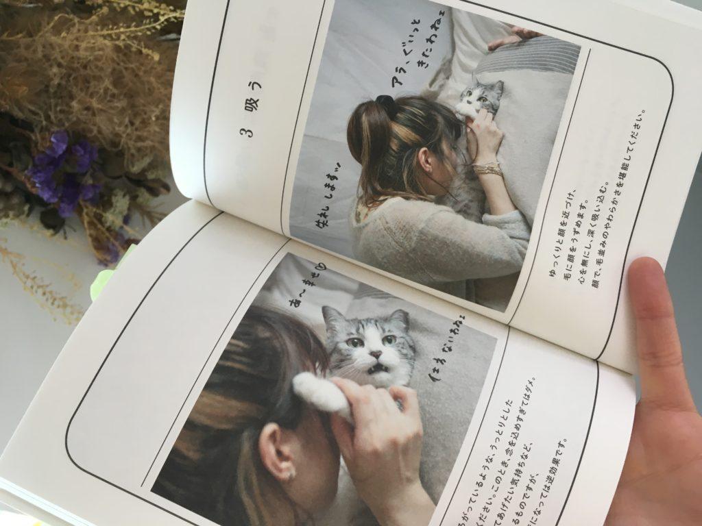 猫を吸う(=^x^=)