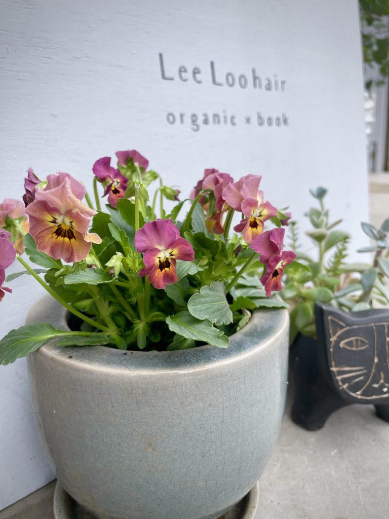 植物、花たち